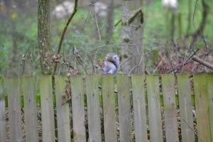 Wildlife on site