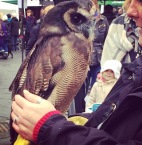 A wise old bird ... and an owl