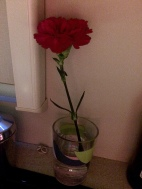 A flower for the lady ... :-)