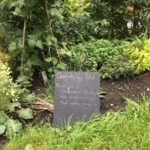 Community vegetable patch