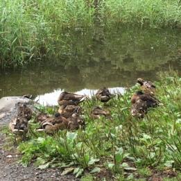 Let sleeping ducks lie ...