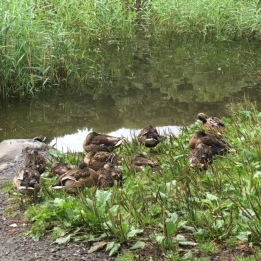 Let sleeping ducks lie ...